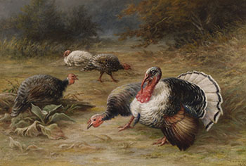 Wild Turkeys in a Clearing by Frederick Arthur Verner