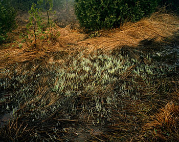 Grasses, Bruce Peninsula by Edward Burtynsky