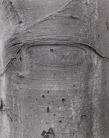 Shapes on a Tree by Jeff Wall